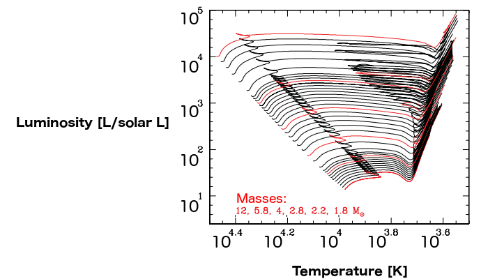 Synthesised evolutionary tracks of stars with masses increasing from 1.8 solar masses (lowest red line) to 12 solar masses (topmost red line). The stars spend most of their life along the leftmost diagonal where there is a nice relationship between temperature (which increases to the left!) and luminosity. When it has run out of fuel, it departs and follows the track to the right, becoming mostly colder.
